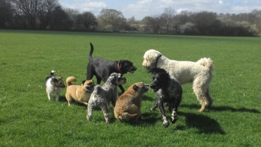 midhurst dog training